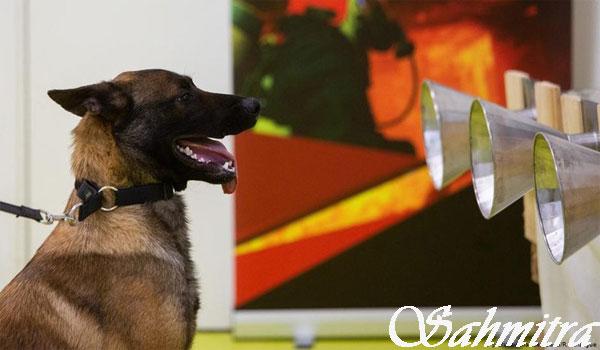 Masa Benar, Anjing Bisa Mengendus Bau Khas Infeksi COVID-19?