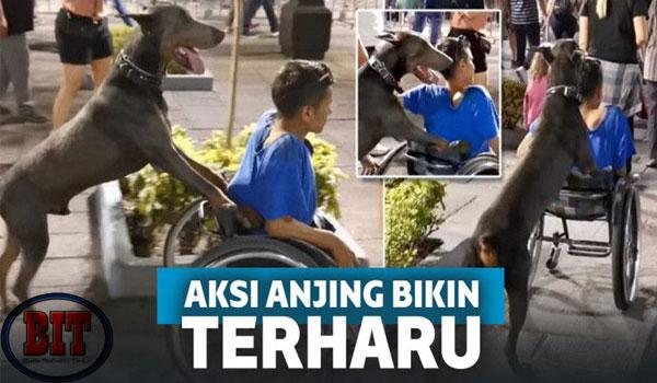Sedih! Anjing Ini Kedapatan Dorong Kursi Roda Milik Anak Disabilitas