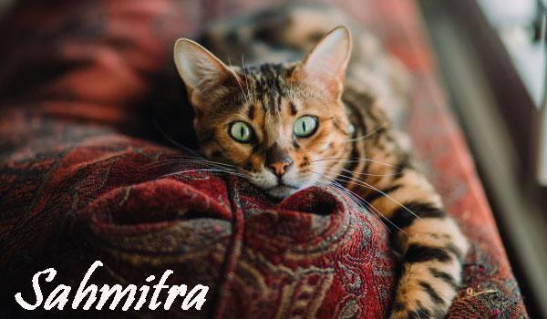 Pertama di Inggris, Seekor Kucing Peliharaan Dinyatakan Positif Covid-19