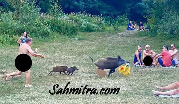Naturis Tanpa Busana Ini Kejar Babi Hutan yang Mencuri Barang Miliknya
